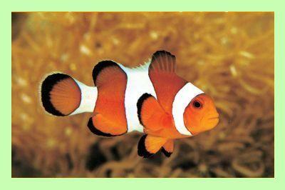 Clownfish для Skype